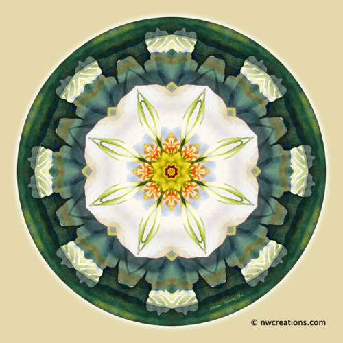 Mandalas_for_a_New_Earth_5_600